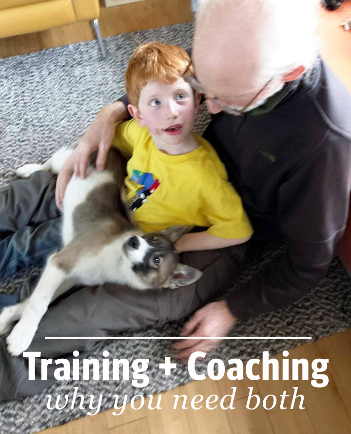 Puppy training, training eye contact, training settle, kids and dogs, coaching the person to train the dog.